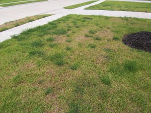 Неухоженный газон